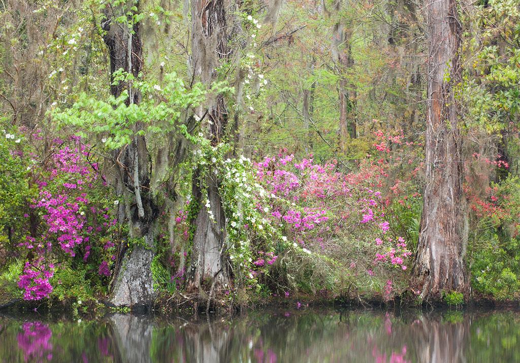 Charleston_20130405_0006WEB