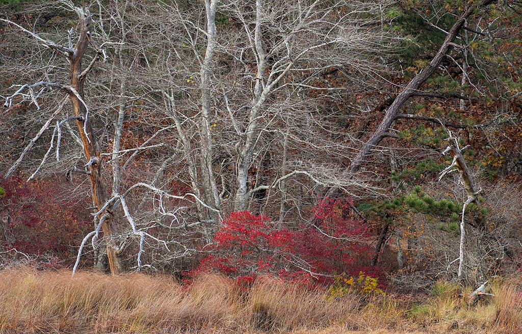 20131109_Cape Cod_0218warmercropped