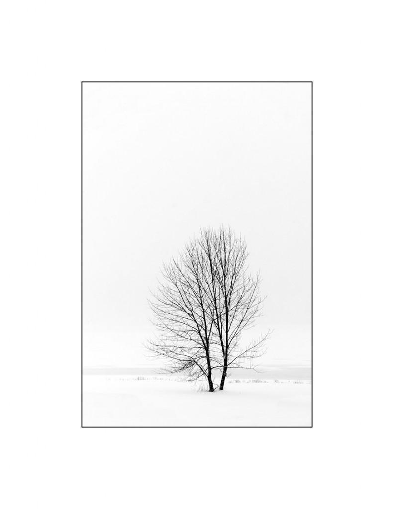 _DSC0431-Editmatt