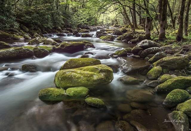Smokie Mountain Stream Spring 2016-033600184