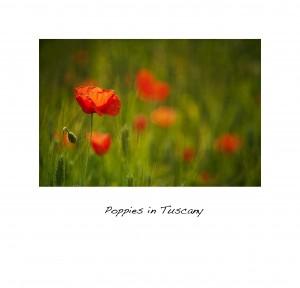 2011May20_Tuscany_1446matted