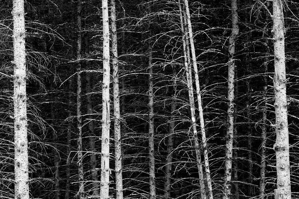 20131004_New Hampshire_0860BW