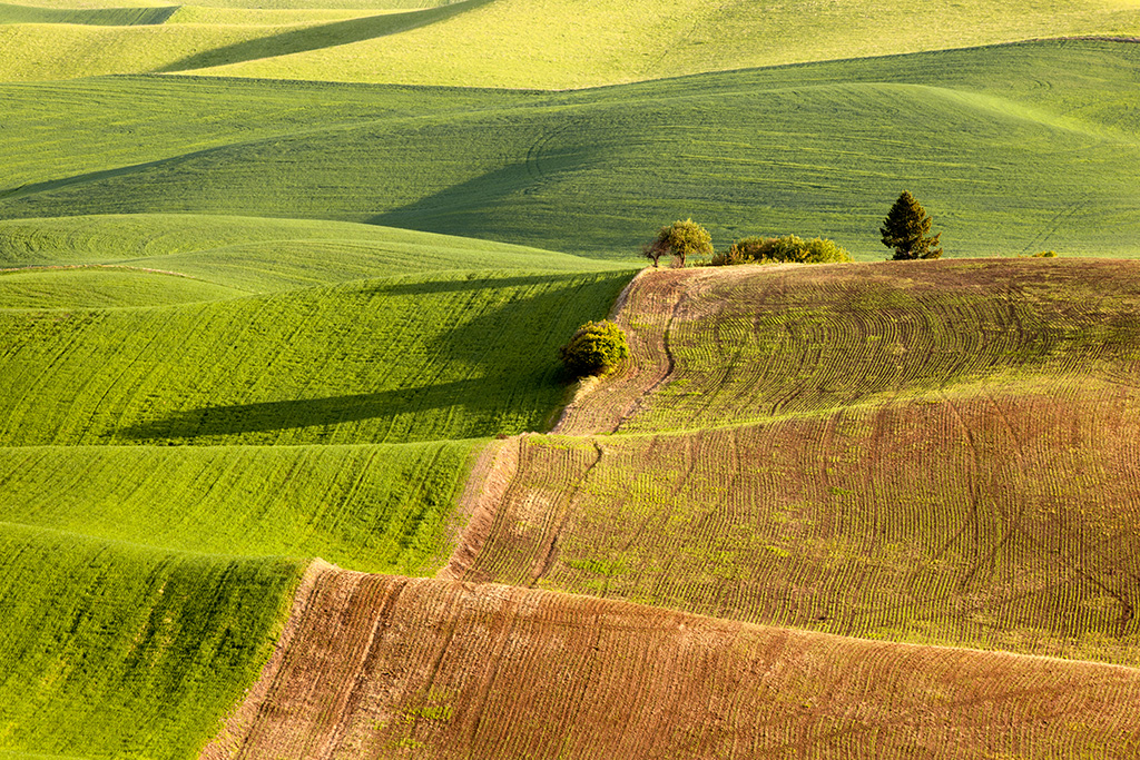The Many Patterns of the Palouse