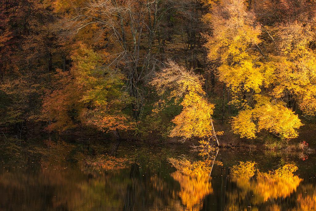 Fall_20121019_0116OPBlend
