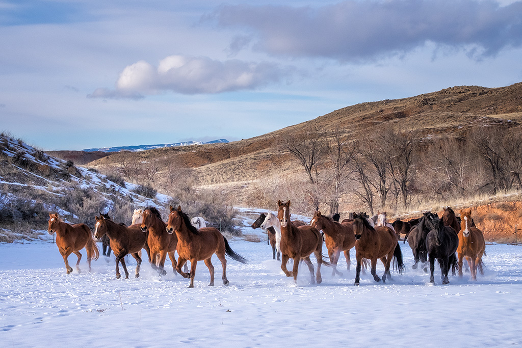 More Horses From the Hideout Ranch