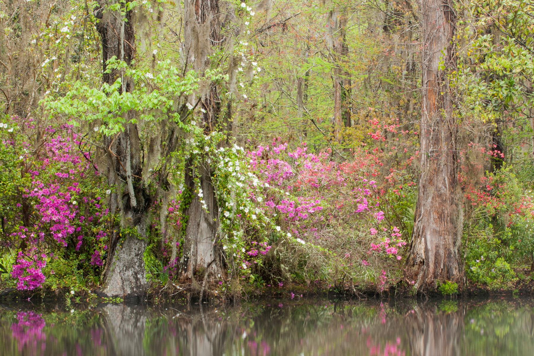 Charleston_20130405_0004
