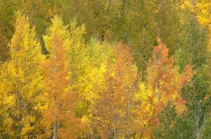 2011Sep29_Colorado_0289.jpg