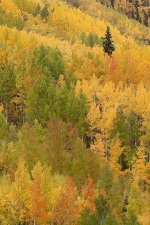 2011Sep29_Colorado_0292.jpg