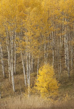 2011Sep29_Colorado_0391.jpg