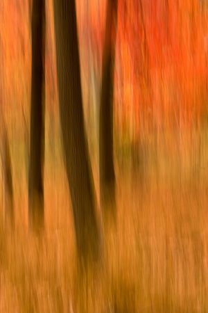 20071116_Fall_5900.jpg
