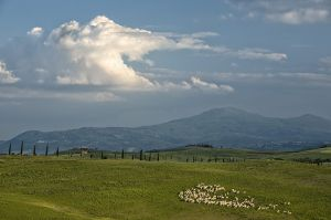2011May18_Tuscany_1097.jpg